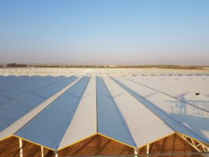 Greenhouses and glasshouse constructions project - Agrikol in cooperation with Debets Schalke working on 44 hectare project in Saudi Arabia (HortiDaily)